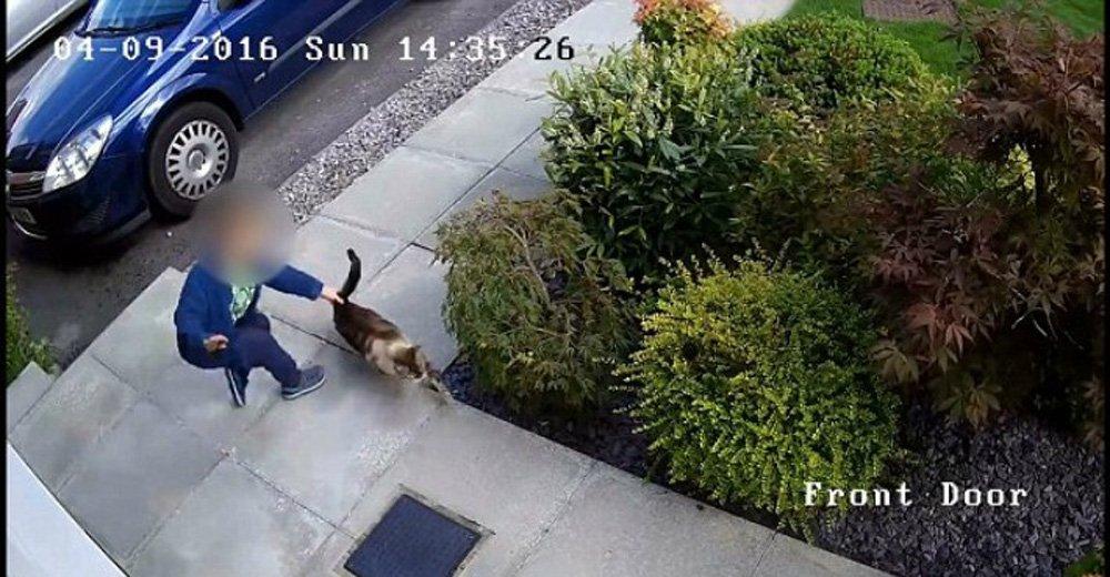Camera kat langer